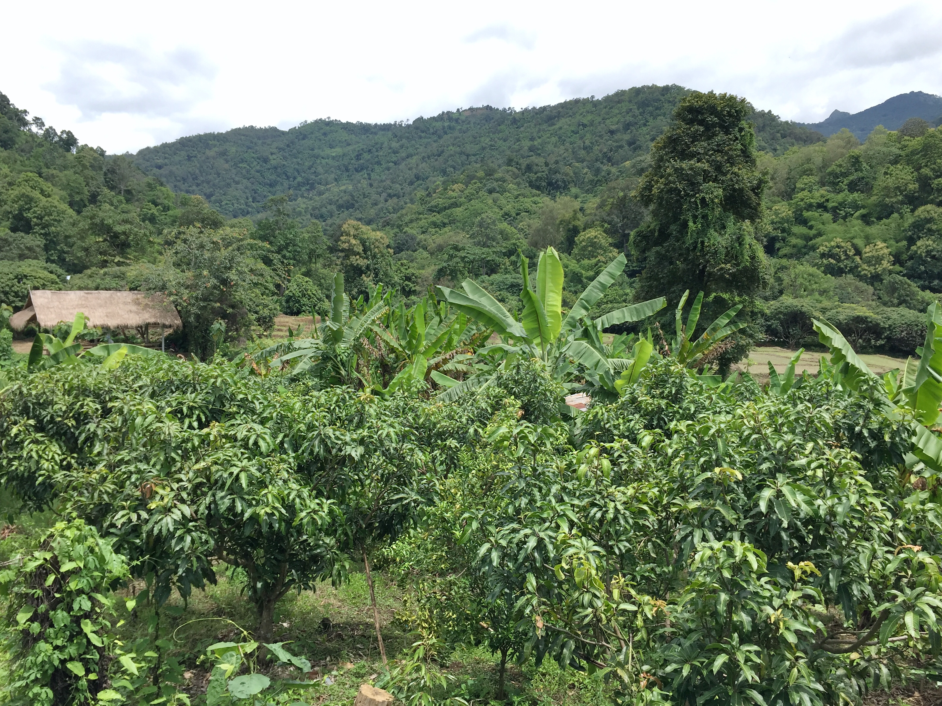 jungle on the chiang mai hills
