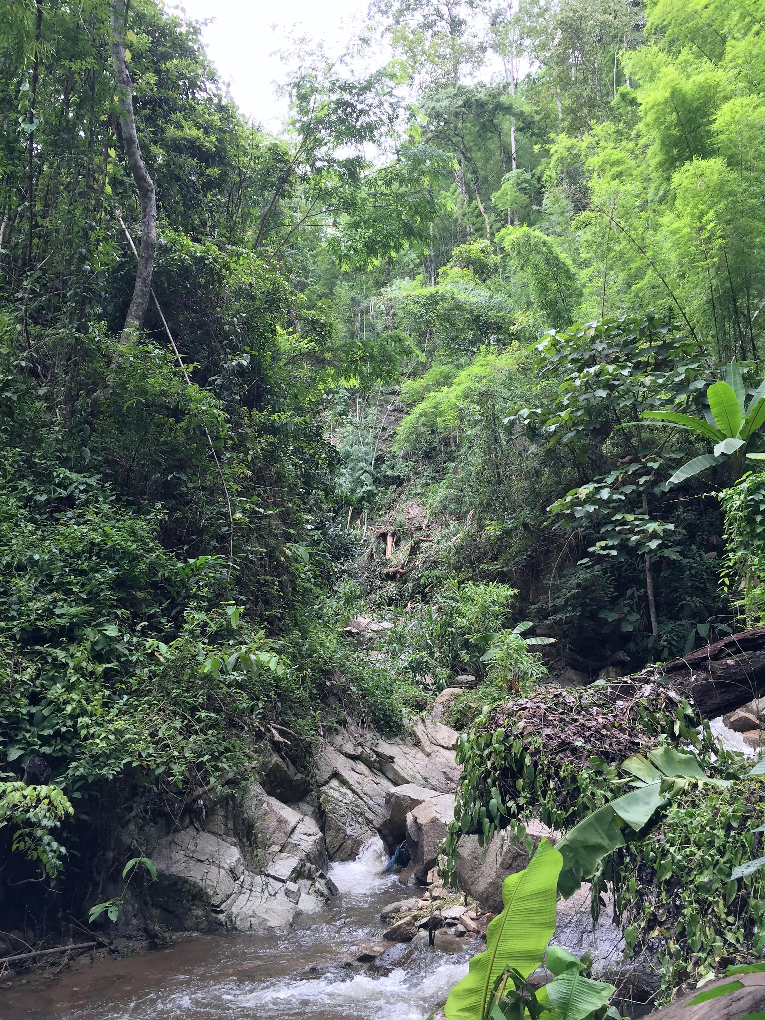 northern thailand jungle