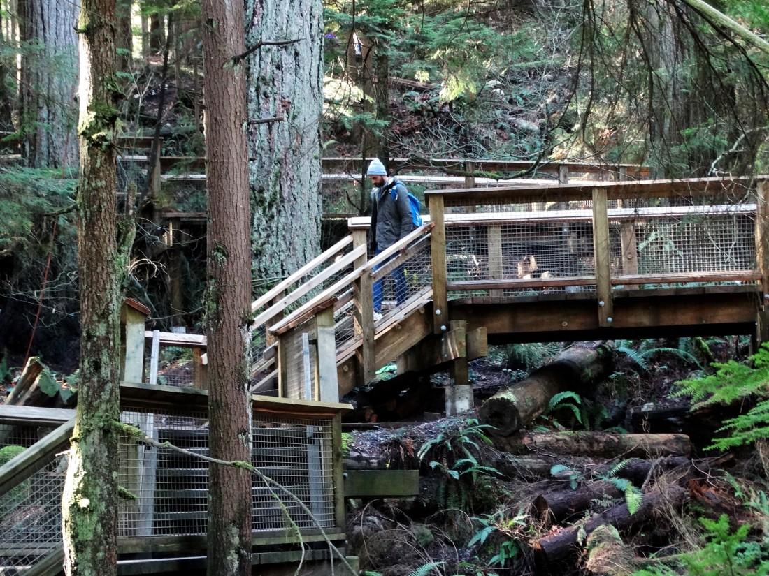 exploring capilano suspension bridge