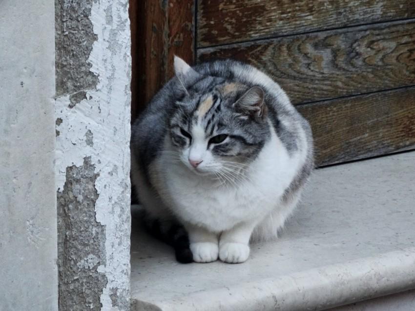 cat in venice