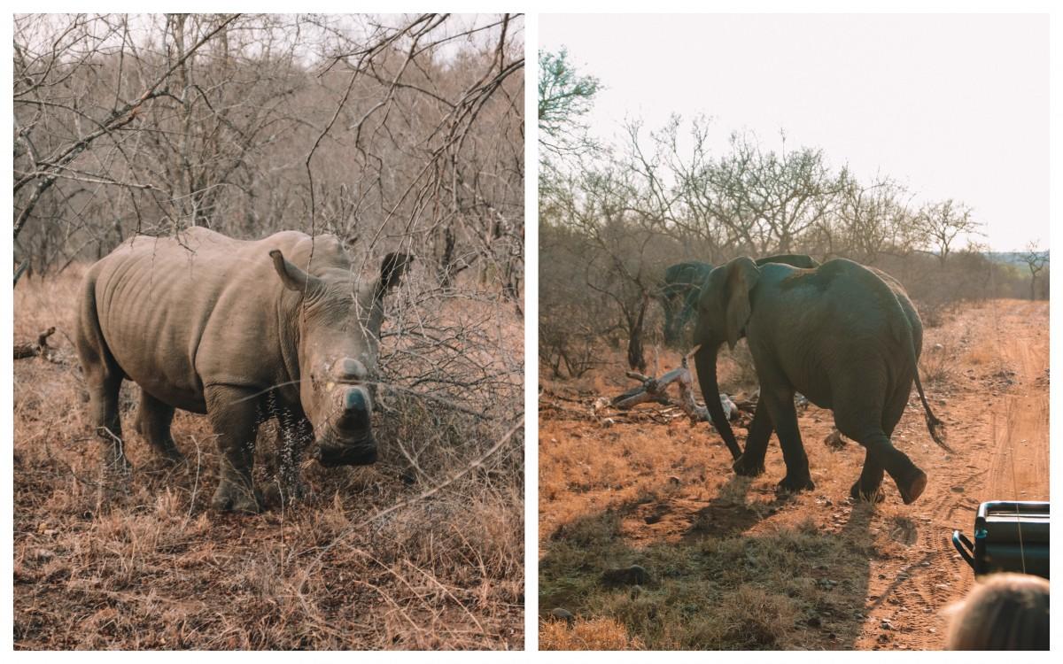 safari karongwe portfolio