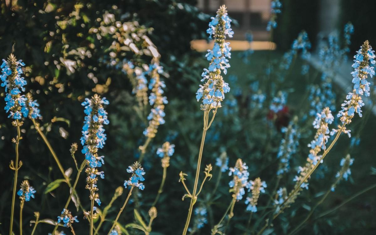 les sources de caudalie flower
