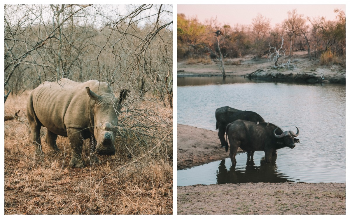 animals karongwe national park