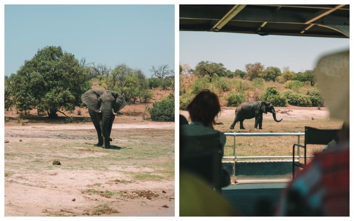 chobe national park daily safari