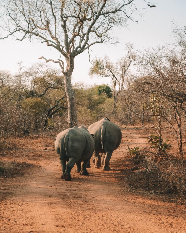 rhino karongwe