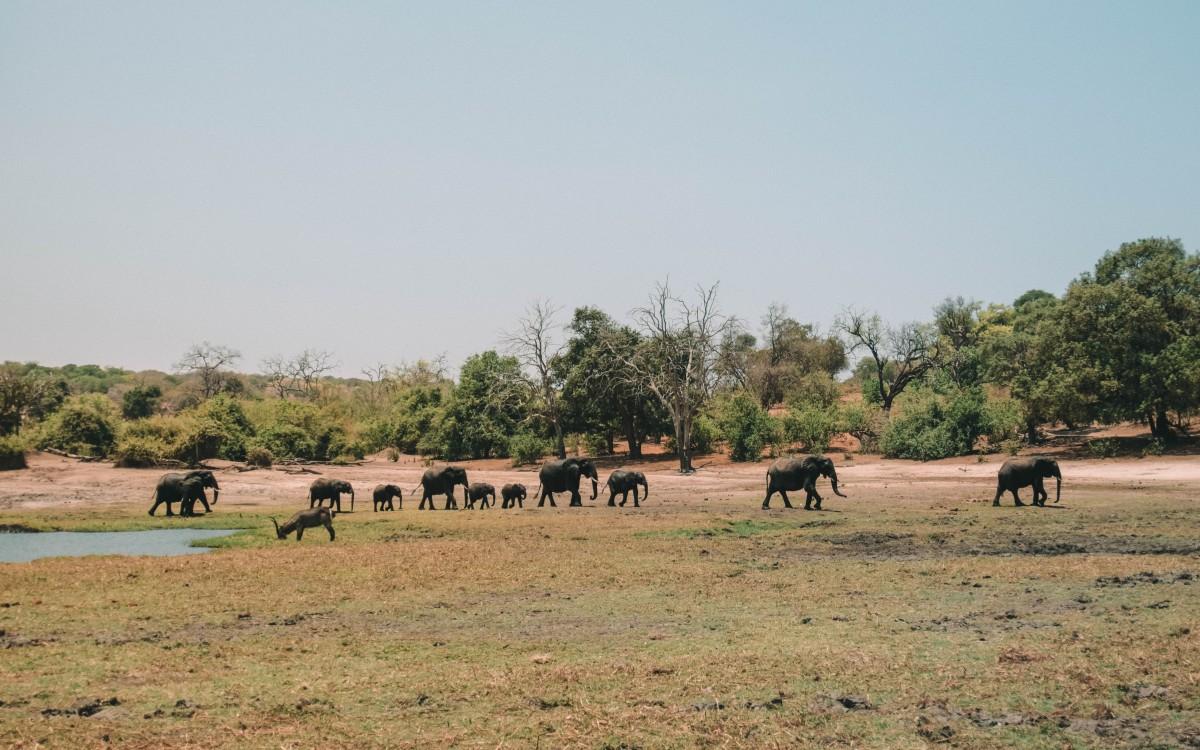 elefanti chobe national park