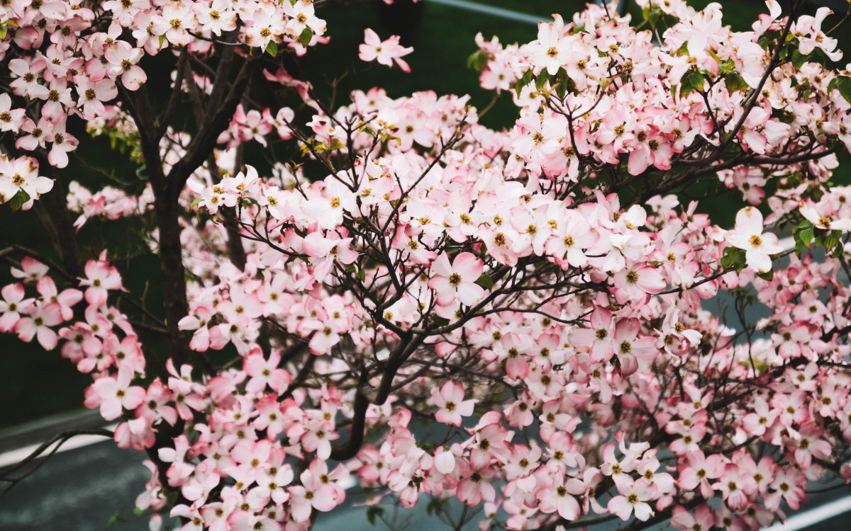 flower garden merano