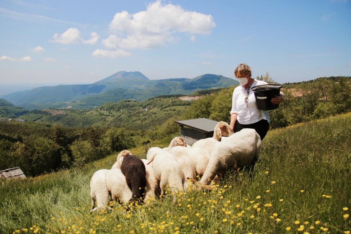 allevamento di pecore lessinia